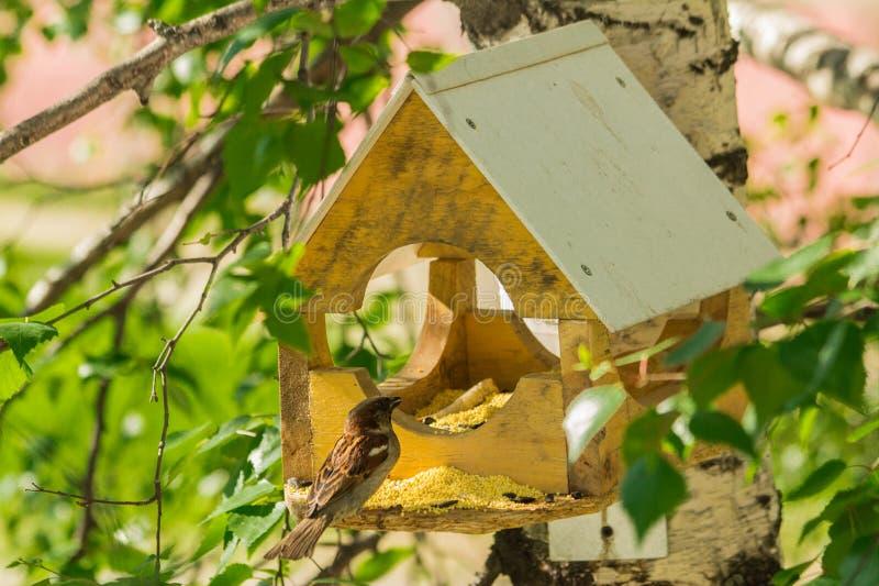 Duvor runt om fågelförlagematare royaltyfri bild