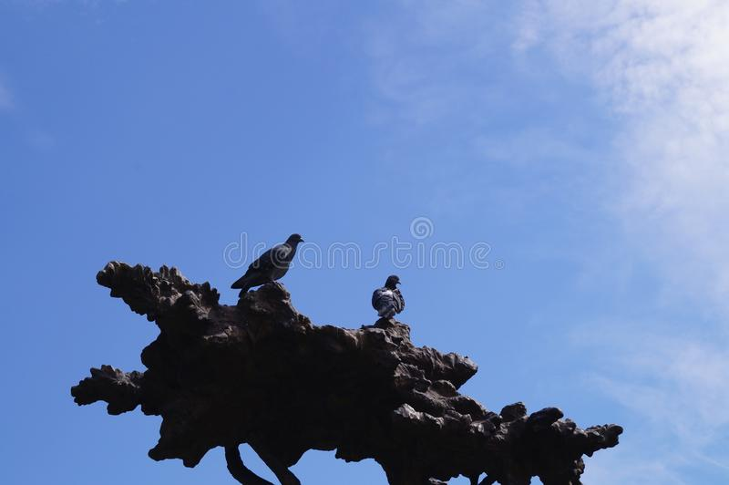 Duvor sitter på ett bronsträd Yoshkar-Ola 2018 royaltyfria bilder