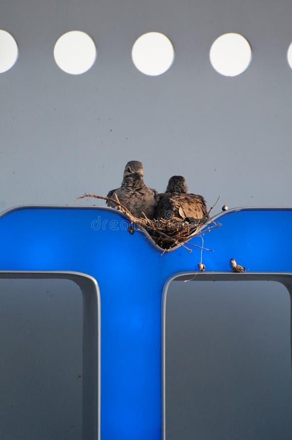 Duvor som bygga bo på ett tecken royaltyfri bild