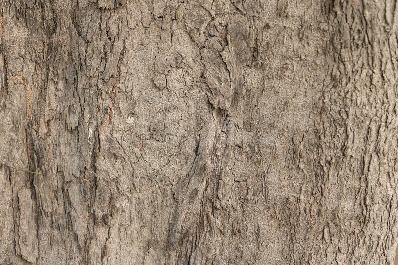 Duzi drzewa w lasach obrazy royalty free