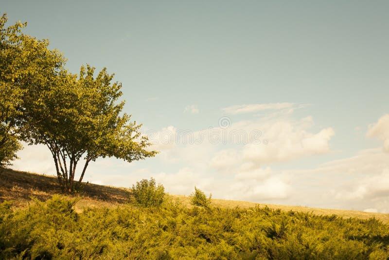 Duzi drzewo, słońce i niebieskie niebo, obraz royalty free