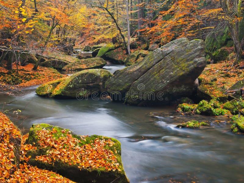 Duzi głazy z spadać liśćmi Jesieni góry brzeg rzeki Żwir i świezi zieleni mechaci głazy na bankach z kolorowymi liśćmi obraz royalty free