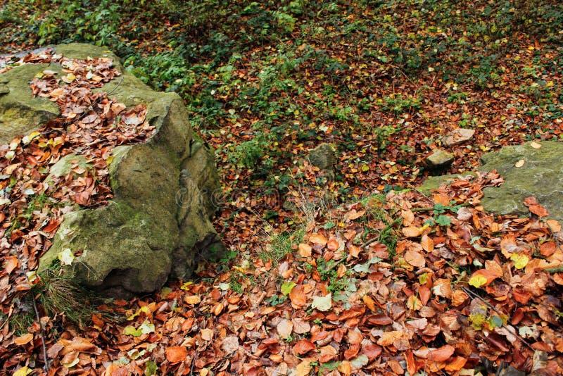 Duzi kamienie z mech i drzewami w mgłowym lesie, tło Krajobraz Jesień fotografia stock