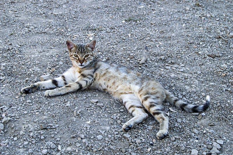 Duzi oko kota obrazki, wielcy przybłąkani koty, kotów oczy piękny słuchani koty piękni kotów oczy, zwierzę domowe kota obrazki, obrazy royalty free