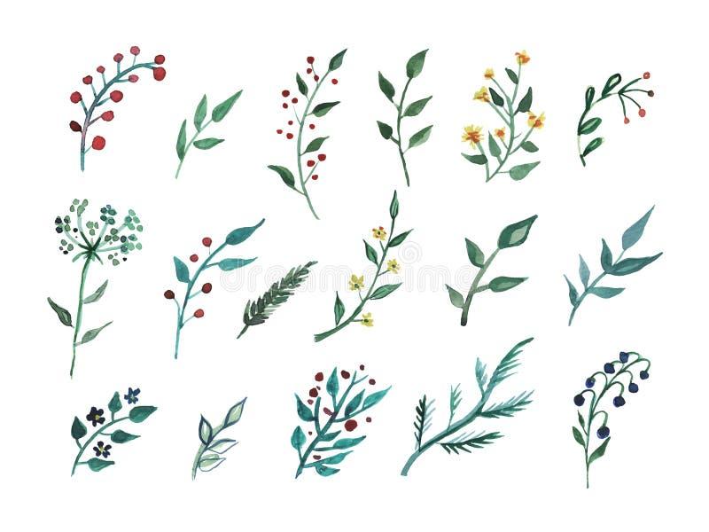 Duzi Ustaleni akwarela elementy - wildflower, ziele, liść kolekcja ogród, dziki ulistnienie, kwiaty, rozgałęzia się ilustracja wektor