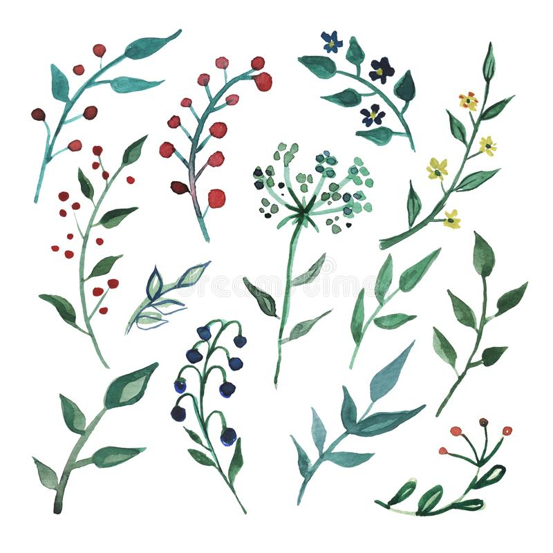 Duzi Ustaleni akwarela elementy - wildflower, ziele, liść kolekcja ogród, dziki ulistnienie, kwiaty, rozgałęzia się ilustracji