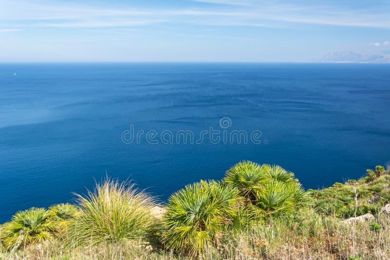 Dvärg- palmträd som vänder mot havet i härligt medelhavs- kust- landskap fotografering för bildbyråer