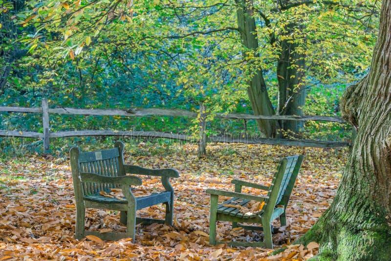 Dwa ławki w parku - doskonalić miejsce dla rozmowy obrazy royalty free