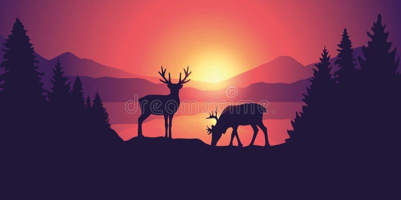 Dwa łoś amerykański w przyrodzie przy pięknym jeziorem w górach przy wschód słońca royalty ilustracja