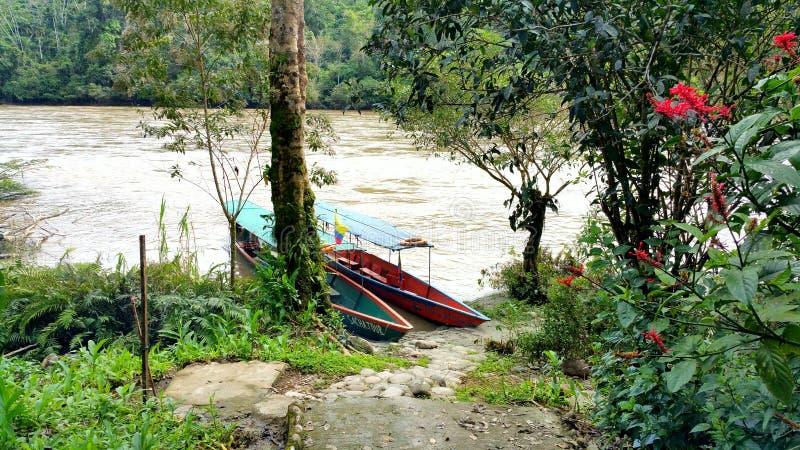 Dwa łodzi przy rzeką w Amazon tropikalnym lesie deszczowym fotografia royalty free