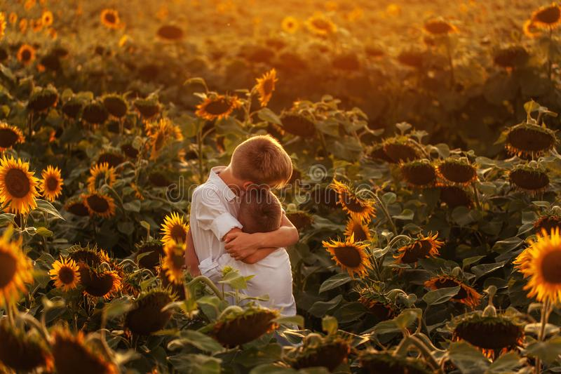 Dwa ślicznej rodzeństwo chłopiec ściska zabawa słoneczników pole i ma Uroczy przyjaciele wpólnie na ciepłym letnim dniu Brat miło fotografia stock