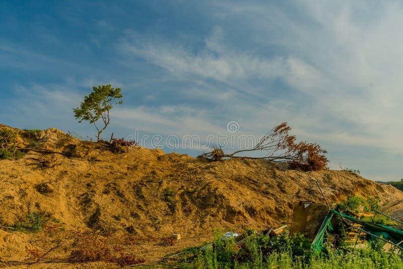 Dwa śmieci na ziemi i drzewa zdjęcia royalty free