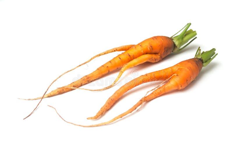 dwa śmiesznej marchewki na białym tle zdjęcia royalty free