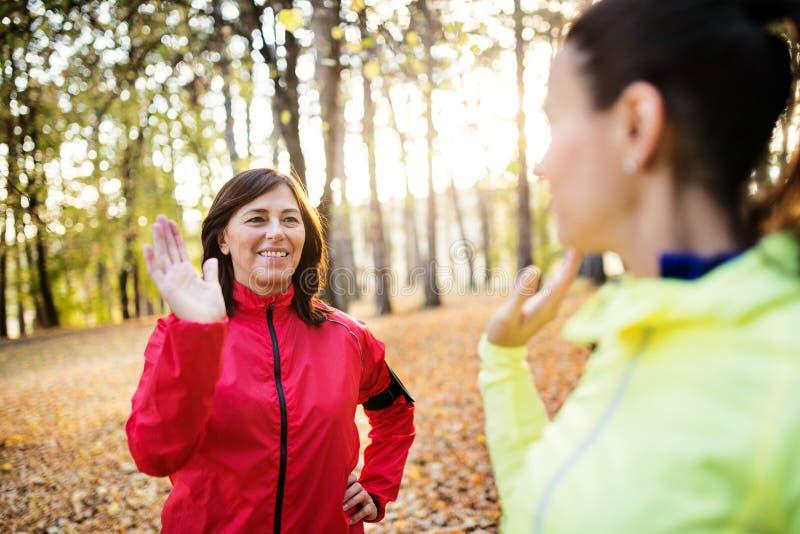 Dwa żeńskiego biegacza rozciąga outdoors w lesie w jesieni naturze przy zmierzchem zdjęcie royalty free