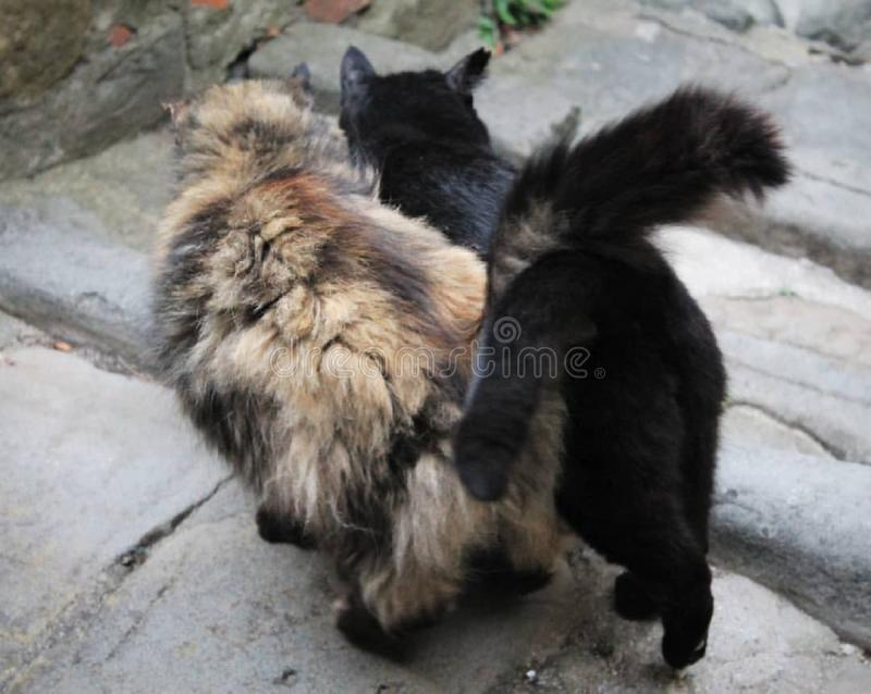 Dwa życzliwego kota w średniowiecznej wiosce obrazy royalty free