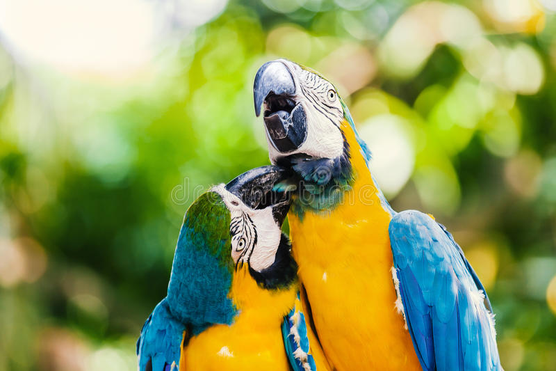 Dwa aronów ` s w Cartagena fotografia stock