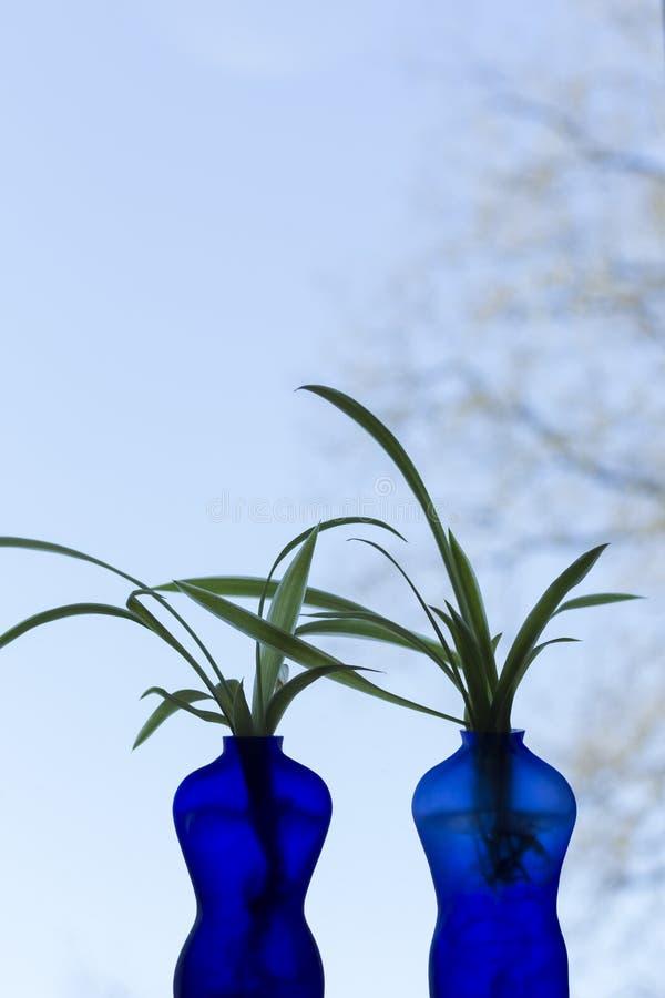 Dwa błękitnej wazy kształtującej jako mężczyzna i kobieta z rośliną, niebieskie niebo w tle fotografia stock