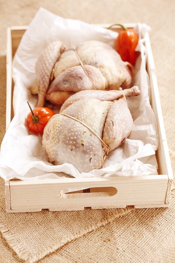 Dwa bażantów ptak skubający i faszerujący w drewnianym pudełku, fotografia stock