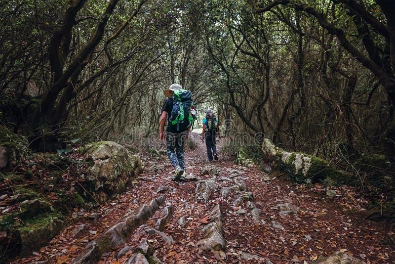 Dwa backpackers spacer w bajka lesie zdjęcia royalty free