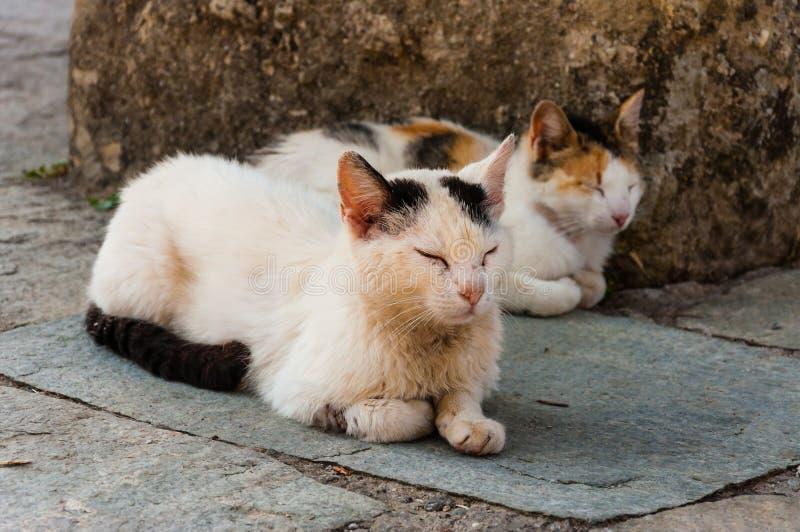Dwa białego łaciastego ulicznego kota kłama na ziemi z zamkniętymi oczami obrazy stock