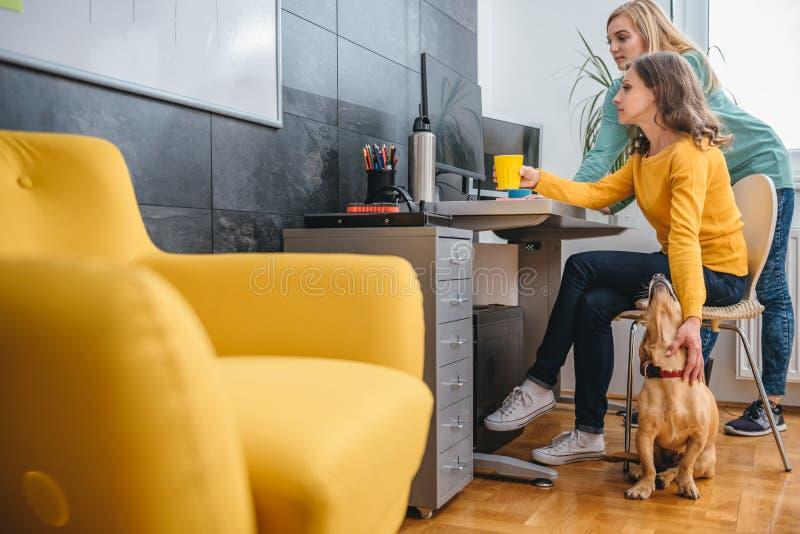 Dwa biznesowa kobieta biurkiem używać komputer zdjęcia royalty free