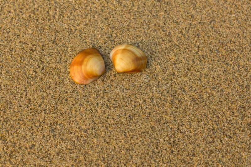 Dwa brąz pomarańczowej skorupy zamykają w górę zamazanego żółtego piaska na fotografia royalty free