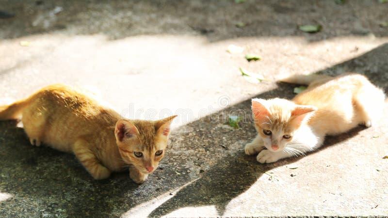 Dwa brown kiciuni kłama na footpath zdjęcie royalty free