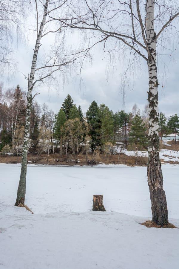 Dwa brzozy drzewa i rzeka zdjęcia royalty free