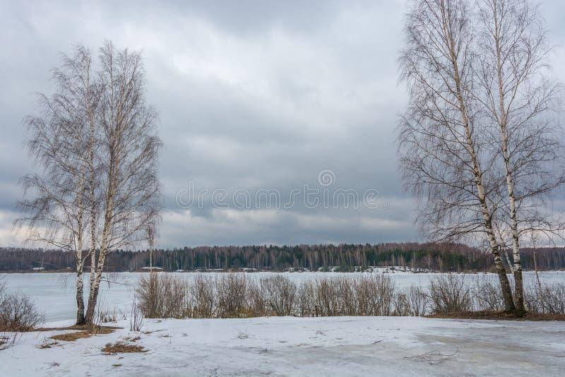 Dwa brzozy drzewa i rzeka zdjęcia stock