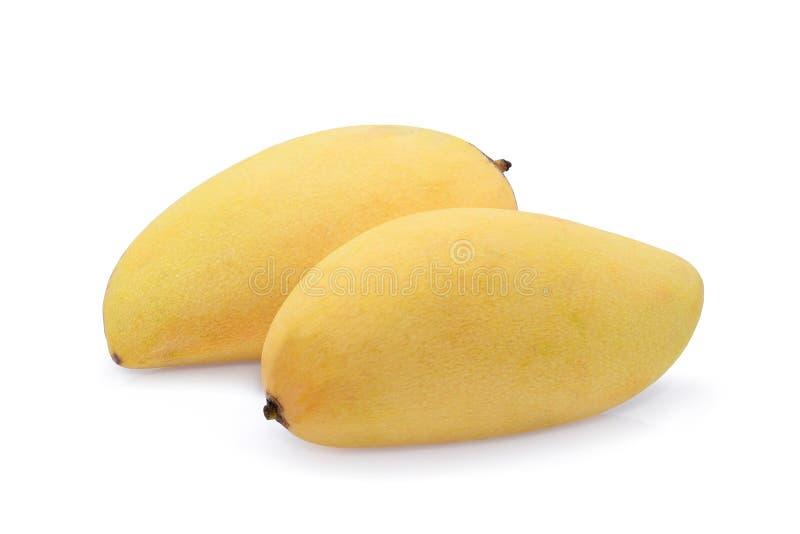 Dwa cały dojrzały żółty mango odizolowywający na bielu zdjęcie stock