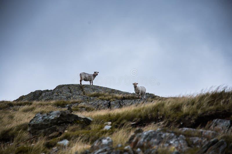 Dwa cakiel pozyci na skale w górach zdjęcia stock