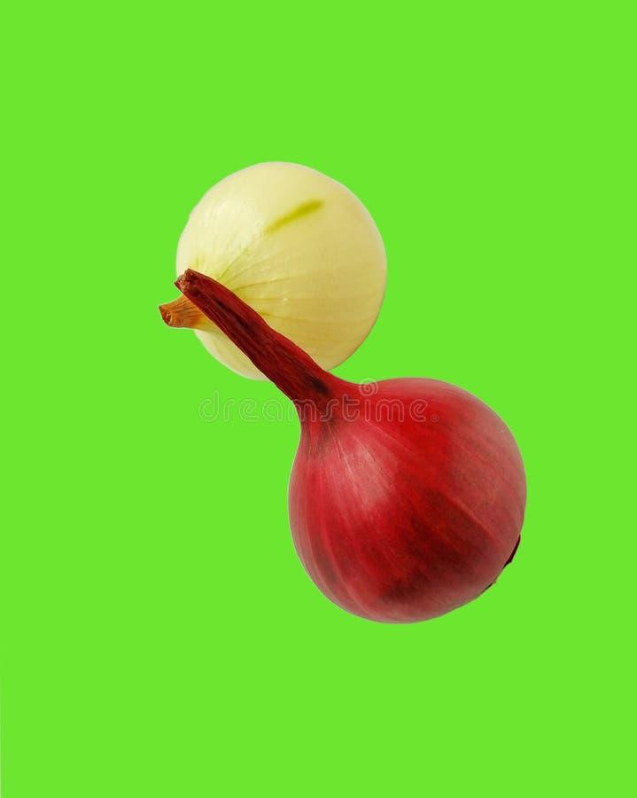 Dwa cebuli na zielonym tle zdjęcie royalty free