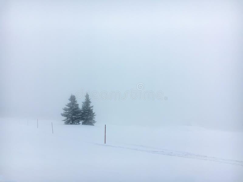 Dwa choinki w ciężkiej mgle na śnieżnej zbocze góry obraz royalty free