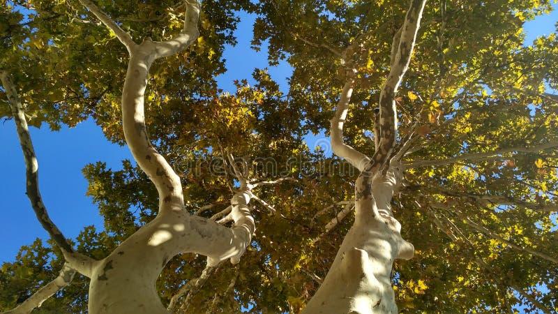 Dwa curvy kolorowego płaskiego drzewa pod słońc światłami obraz stock