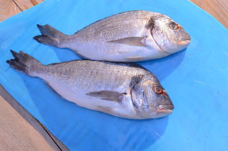 Dwa dorado ryba na błękitnym szkle zdjęcia stock