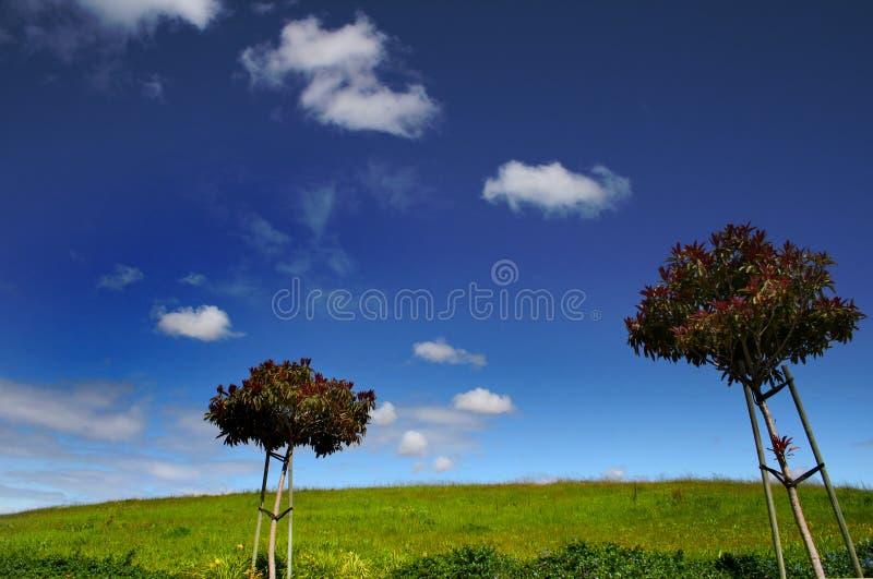 dwa drzewa zdjęcie royalty free