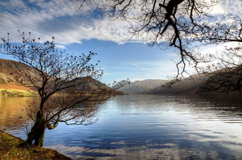 Dwa drzewa Ennerdale wodą obrazy royalty free