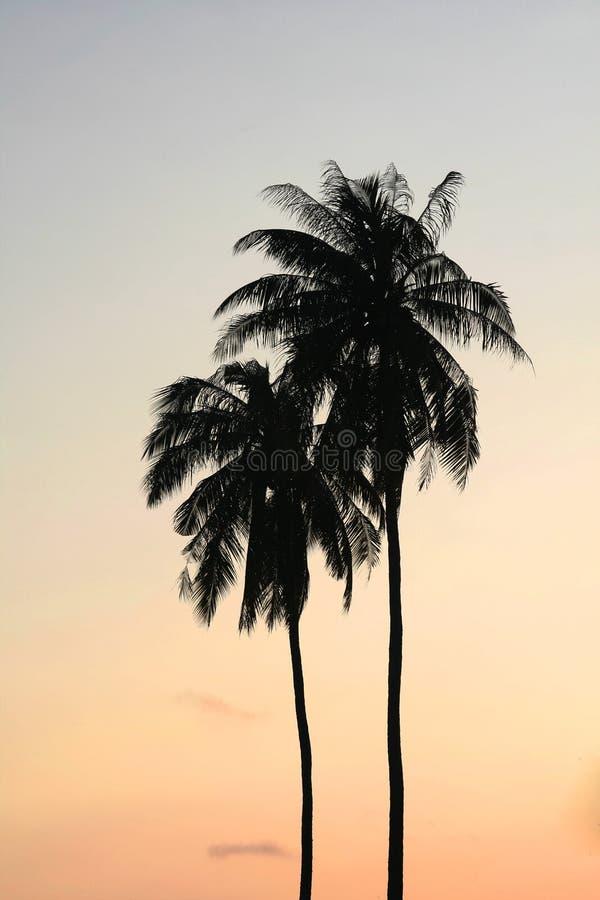 dwa drzewa kokosowe obraz stock