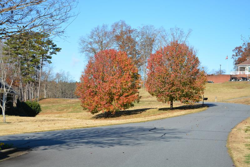 Dwa drzewa na drodze obrazy stock