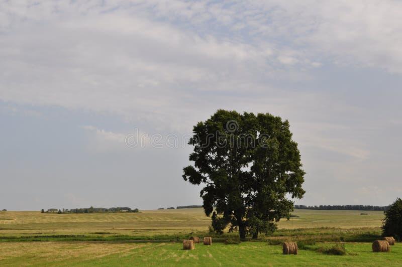 Dwa drzewa po środku pola zdjęcie stock