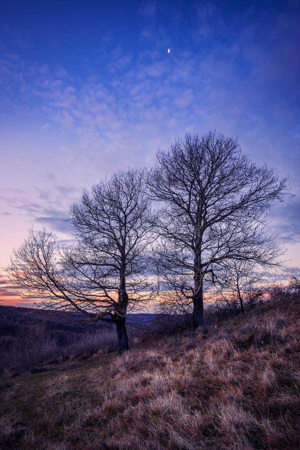 Dwa drzewa przeciw niebieskiemu niebu na Grudnia ranku z hoar mrozem obrazy royalty free