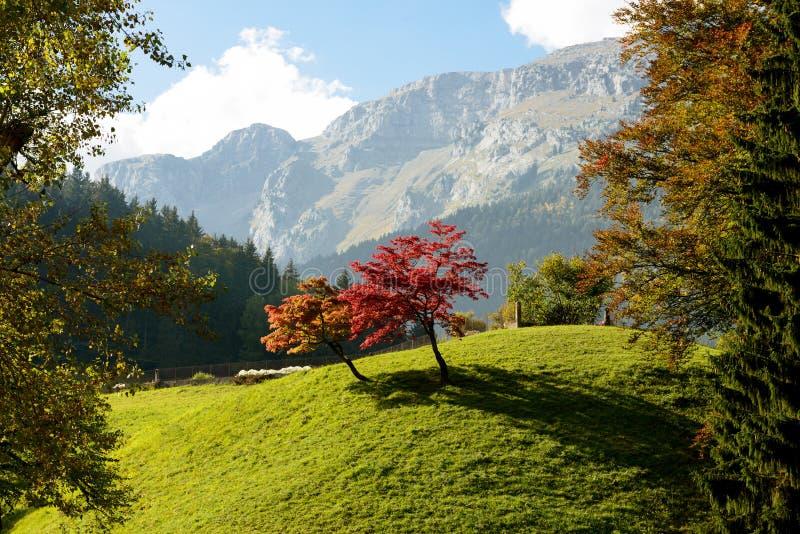Dwa drzewa z pięknymi spadków kolorami zdjęcie royalty free