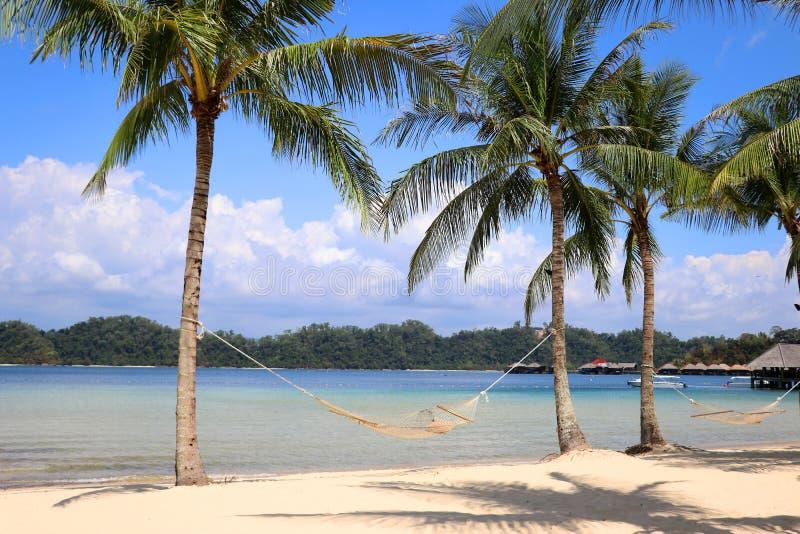 Dwa drzewka palmowego z hamakiem na pla?y - Gaya wyspa Malezja Azja obraz royalty free