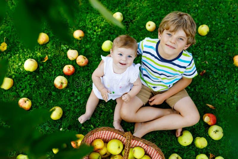 Dwa dziecka podnosi jabłka na gospodarstwie rolnym w wczesnej jesieni Mała dziewczynka i chłopiec bawić się w jabłoń sadzie Dziec zdjęcie royalty free