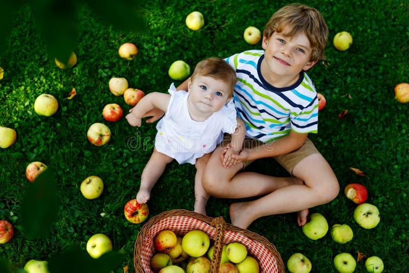 Dwa dziecka podnosi jabłka na gospodarstwie rolnym w wczesnej jesieni Mała dziewczynka i chłopiec bawić się w jabłoń sadzie Dziec zdjęcie stock