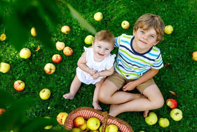 Dwa dziecka podnosi jabłka na gospodarstwie rolnym w wczesnej jesieni Mała dziewczynka i chłopiec bawić się w jabłoń sadzie Dziec obraz royalty free