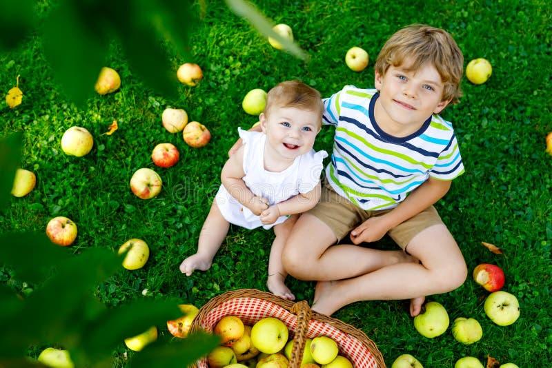 Dwa dziecka podnosi jabłka na gospodarstwie rolnym w wczesnej jesieni Mała dziewczynka i chłopiec bawić się w jabłoń sadzie Dziec obrazy royalty free
