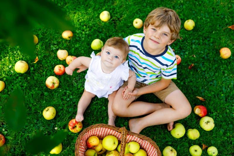 Dwa dziecka podnosi jabłka na gospodarstwie rolnym w wczesnej jesieni Mała dziewczynka i chłopiec bawić się w jabłoń sadzie Dziec obraz stock
