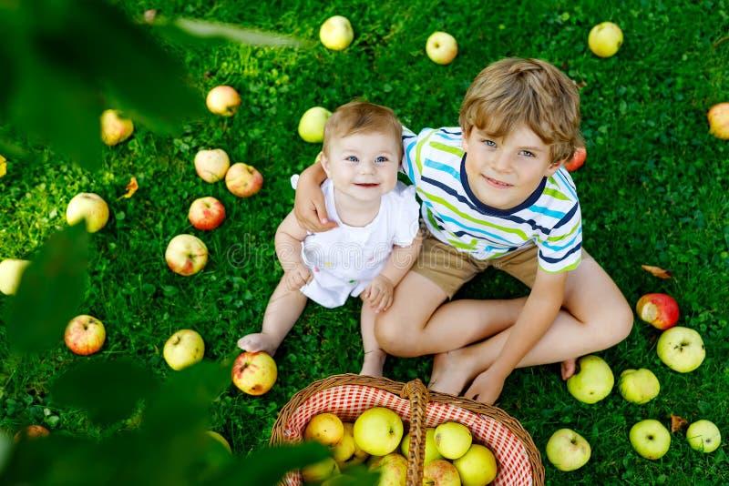 Dwa dziecka podnosi jabłka na gospodarstwie rolnym w wczesnej jesieni Mała dziewczynka i chłopiec bawić się w jabłoń sadzie Dziec zdjęcia royalty free