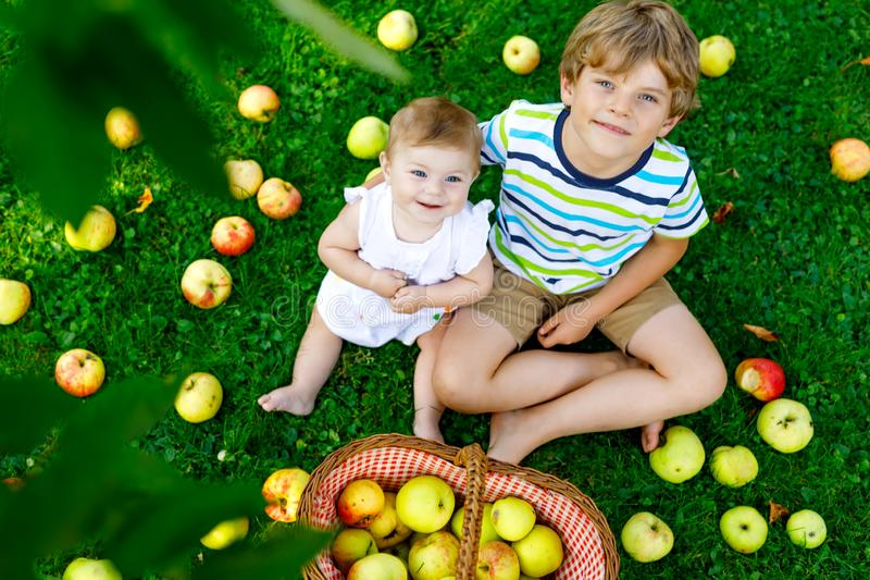 Dwa dziecka podnosi jab?ka na gospodarstwie rolnym w wczesnej jesieni Ma?a dziewczynka i ch?opiec bawi? si? w jab?o? sadzie Dziec zdjęcia royalty free